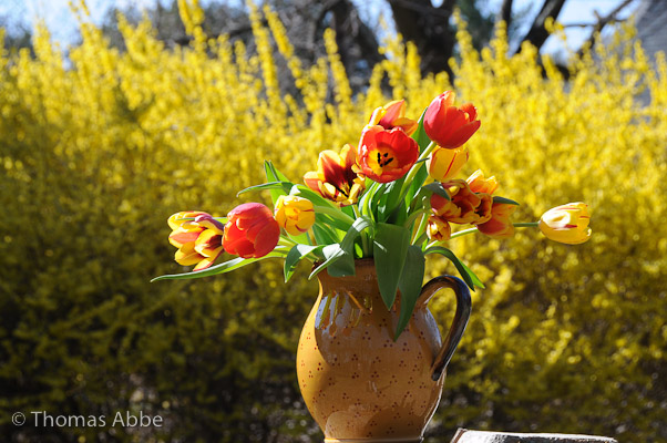 Tulips and Pitcher